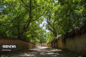 عکس/ بهار در کوچه باغهای شیراز