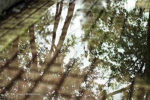 عکس/ بارش باران تهران