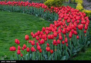 عکس/ جشنواره لالههای کرج