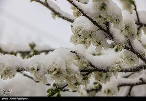 عکس/ بارش سنگین برف در گیلان