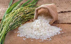 برنج گندم