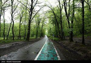 عکس/ پارک جنگلی در روزهای بهاری