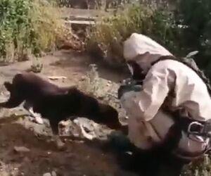 نجات توله سگ، رفتار مادر و مهربونی آتشنشان ماهشهری +فیلم