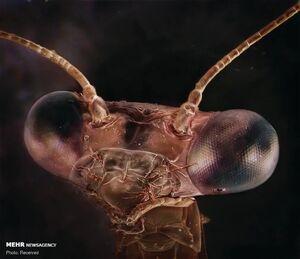 پرتره حشرات از نمای نزدیک