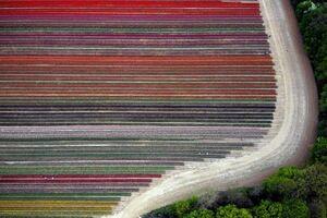 تصویر هوایی زیبا از مزرعه گل
