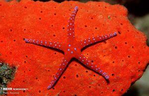 عکس/ استتارهای جالب دنیای زیر آب