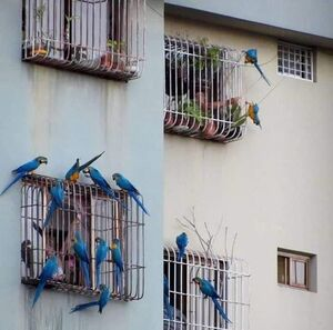 عکس/ پرندگان آزاد مردم در قفس