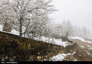 عکس/ بارش برف بهاری در رامسر