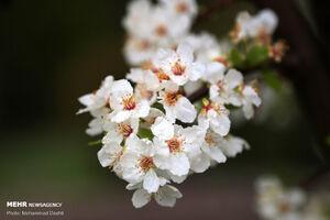 عکس/ جلوههای زیبای بهار در اردبیل
