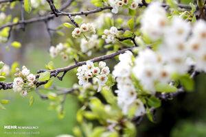جلوههای زیبای طبیعت بهاری اردبیل
