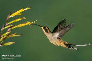 عکس/ پرندگان زیبای جنگلهای برزیل
