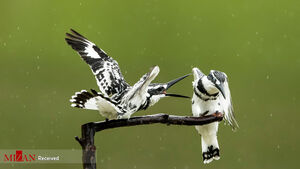 تصاویر برگزیده حیات وحش هفته