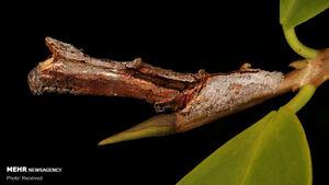 عکس/ استتارهای جالب حشرات