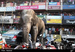 فیلم/ پلیس هند دست به دامن فیلها شد