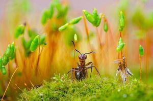عکس/ نمای نزدیک از مورچه