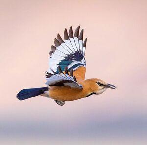 تصویری زیبا از پرندهای کمیاب