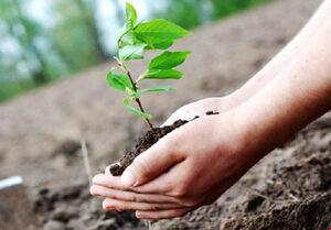 عکس/ هر قربانی کرونا، یک درخت