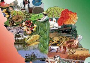 گزارش ویژه تسنیم| این یک بلوف نیست؛ «ایران، میتواند غذای ۵۰۰ میلیون نفر را تأمین کند»