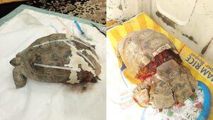 جان تازه لاک پشت زخمی در سیستان و بلوچستان +فیلم