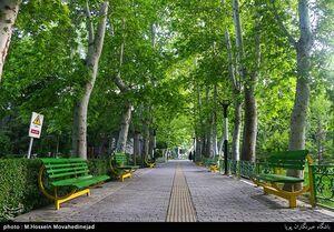 عکس/ حال و هوای بهاری در تهران