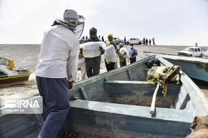 عکس/ رهاسازی بچه ماهیهای سفید در دریاچه هامون