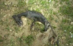 کشف لاشه یک موجود عجیب در منطقه شکار ممنوع