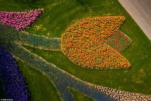 تصاویر زیبا از یک مزرعه گل در هلند