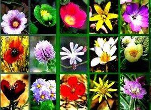 عکس/ گلهای وحشی مناطق کوهستانی و کویری دامغان
