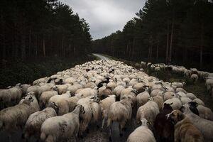 چرا مرغ و گوسفند در ایران پرواز میکنند؟ +فیلم