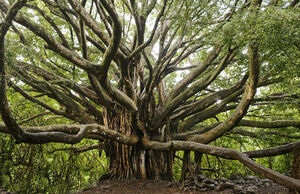 شهرداری از جان درختها چه میخواهد؟ +عکس