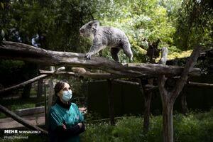 باغ وحش مادرید در روزهای قرنطینه