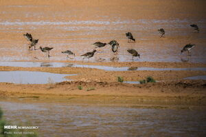عکس/ بهشت پرندگان مهاجر در دل کویر