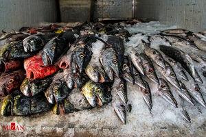 عکس/ بازار ماهی فروشان زاهدان