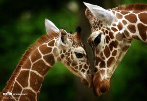 مهر مادری در دنیای حیوانات