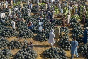 تصویری جالب از بازار هندوانه فروشان