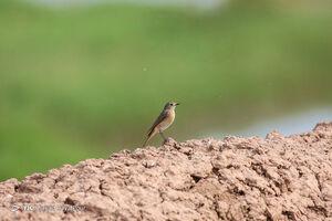 عکس/ تالاب مره، بهشت پرندگان مهاجر
