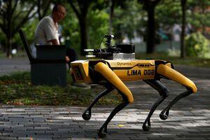 عکس/ سگ ربات