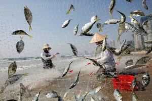 عکس/ ماهیها در تور صیاد