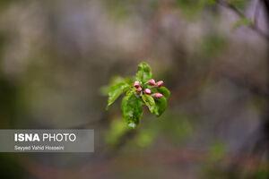 شکوفههای اردیبهشت