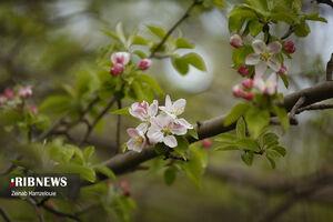 شکوفههای بهاری دماوند