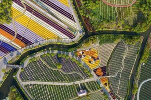 تصویرهوایی از مزرعه گل در چین