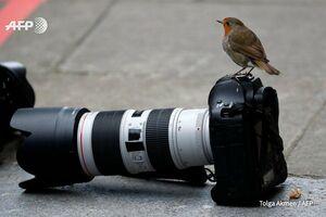عکس/ ژست خاص پرنده