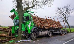 عکس/ انتقام یک درخت