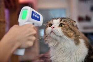 تب سنجی از گربه