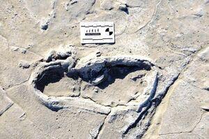 عکس/ کشف صدها رد پای قدیمی از انسان