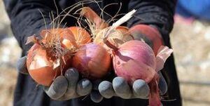 اولین شلیک بر پیکر کشاورزی در سال جهش تولید/ ضعف دیپلماسی اقتصادی وزارت خارجه محسوس است