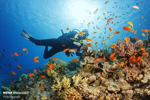 عکس/ صخرههای شگفت انگیز مرجانی جهان