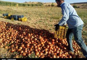 سپاه به بازار عرضه کشاورزی ورود کرد