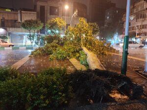 عکس/ سقوط درخت در خیابان تهران بر اثر توفان شدید