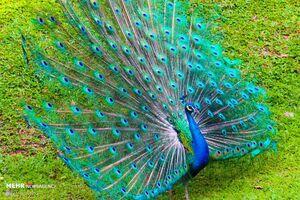 عکس/ زیباترین پرندگان